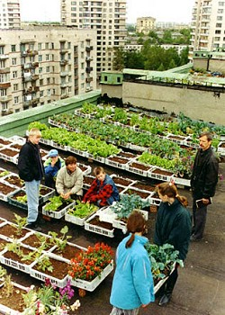 A rooftop garden in St Petersburg. Photo: www.tve.org