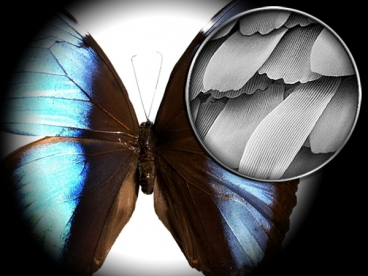 Butterfly wing under an electron microscope Photo: MIT and NSF